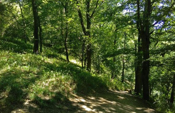 Podkomorské lesy